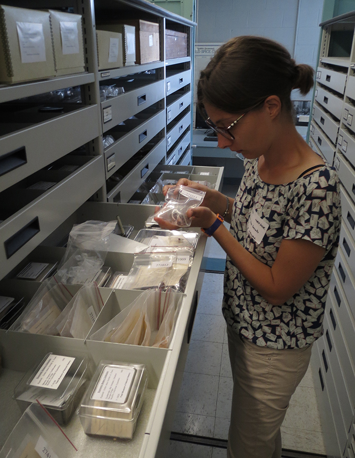 Clara Granzotto collecting historical reference samples of plant gums for mass spectrometric analysis from the Economic Botany collections of the Field Museum of Natural History, Chicago